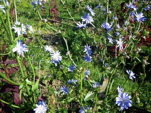 Wild Backyard Herbs : ??????? ????? ?????? ? ????????