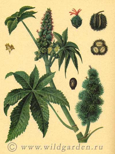 Цветы глицерин 153