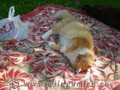 рыжая кошка отдыхает